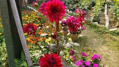 IMPORTANCE OF FLOWERS  [ फूलो का महत्त्व ]